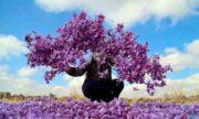 بیش از ۴۶ تن زعفران در بورس کالا معامله شد