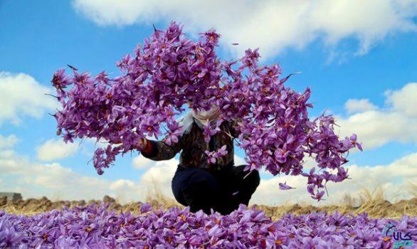 معاملات گواهی سپرده زعفران بهرامن در بورس کالا آغاز شد
