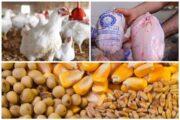احتکار خانگی در بازار مرغ!/ مردم نگران افزایش قیمت هستند