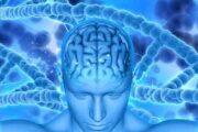 مکمل «کتون» درمانی جدید برای تقویت عملکرد مغز افراد چاق