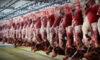واردات ۱۵۰ هزار تن یونجه از روسیه/ انباشت ۷ میلیون راس گوسفند چربیگرفته در دامداریها