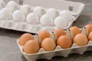 افزایش قیمت تخم مرغ نتیجه کشتار مرغهاست